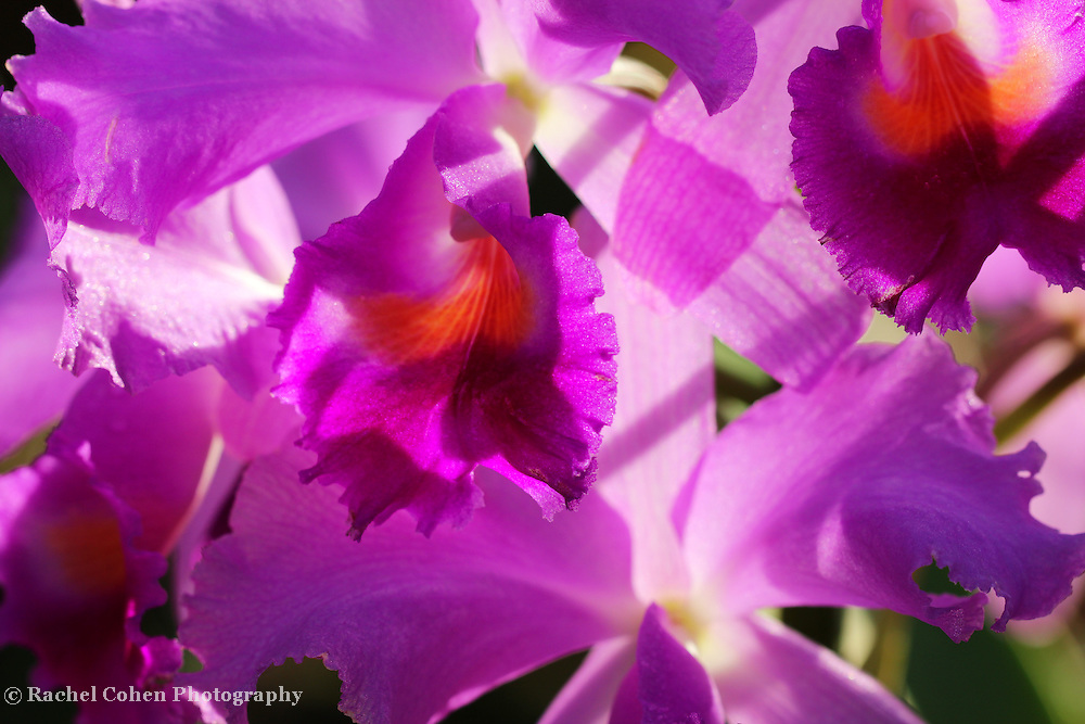 &quot;Tumbled Light'<br />