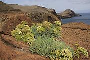 Naturreservat, réserve naturelle Ponte da Sao Lourenço, Madeira. Nature resort. © Romano P. Riedo   fotopunkt.ch