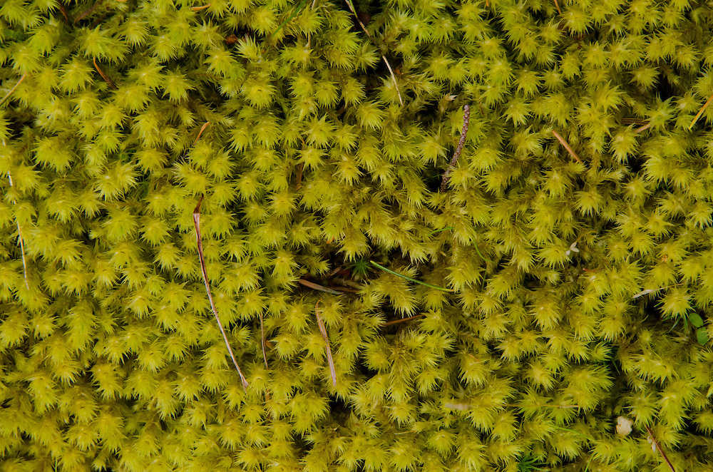 Moss, Jones Island State Park, San Juan Islands, Washington, US