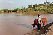 Farmer Gideon Uwihanganye aged 61, leads his cow to drink at the village water source on the Akagera river near Kajevuba Village. Juru Sector. Bugesera district. Rwanda...© Zute Lightfoot / Water Aid.