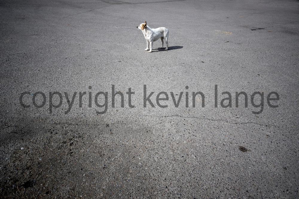 lost dog in cuba, new mexico, usa.