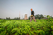 Farmer Han Fangyun walks through a field of carrots in this 2007 image. He believes his neighbor, a giant coal fired power plant, is to blame. After the plant came, pollenation of his fruit trees and corn fields failed. Linfen is one of the most polluted areas in the world.
