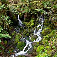 Quinault Rain Forest, ONP  South Shore and North Shore Roads around Lake Quinault, Wa  Bunch Falls, edited & printed 4/18/18