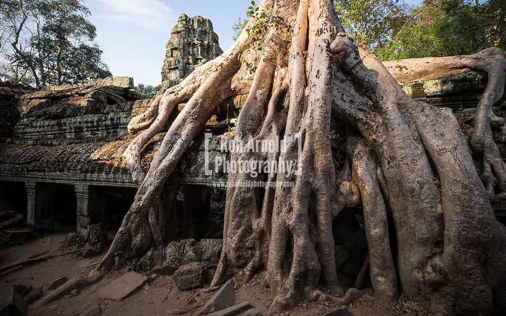 One of the many trees engulfing the buildings of the Ta Prohm Temple in Siem Reap, Cambodia