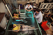 Hypothermia Research at the University of Minnesota Hypothermia laboratory in Duluth; volunteers immersed in cold water at a temperature of 53 degrees Fahrenheit (10 °C). A variety of probes measure their vital functions, skin & core body temperatures. MODEL RELEASED [1988]