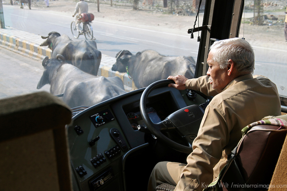 Asia,  India, Rajasthan. Busdriver in traffic in Rajasthan.