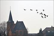 Nederland, Ubbergen, 28-2-2013Wilde grauwe ganzen in de Ooijpolder vliegen langs het kerkje van Persingen, het kleinste dorp van Nederland. Elk jaar overwinteren tienduizenden ganzen in de Gelderse Poort en de uiterwaarden langs de rivier de Waal.Foto: Flip Franssen/Hollandse Hoogte
