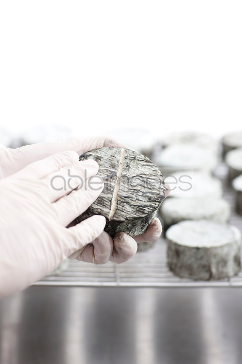 Close up of a man's hands holding a cheese