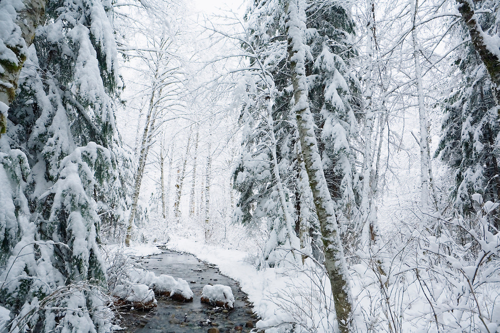 Winter forest scene near Mt Baker Washington USA.