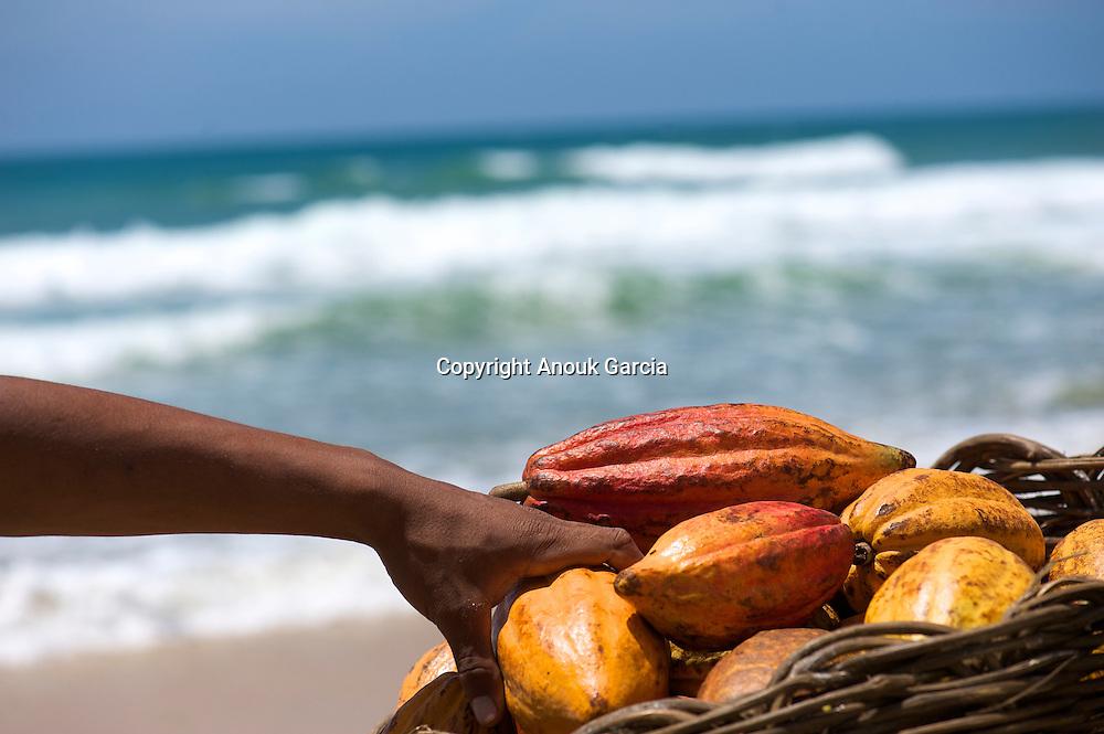 Les nouveaux planteurs de cacao en faisant le pari d'un cacao fin et organique sont en train de se faire une place de choix dans la haute sphe?re des cacaos de prestige///The new cocoa growers by making the bet of a fine and organic cocoa are getting a choice place in the higher realms of the cocoas of prestige.