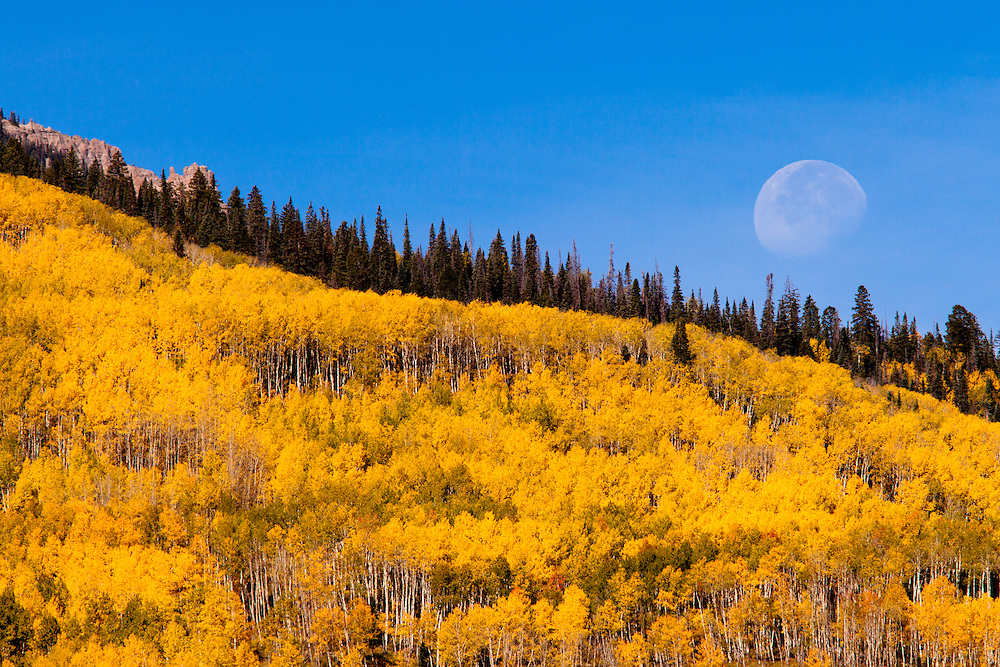 The moon setting over Colorado fall color. Ohio Pass near Gunnison, Colorado.