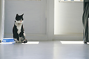 seated cat on gray floor