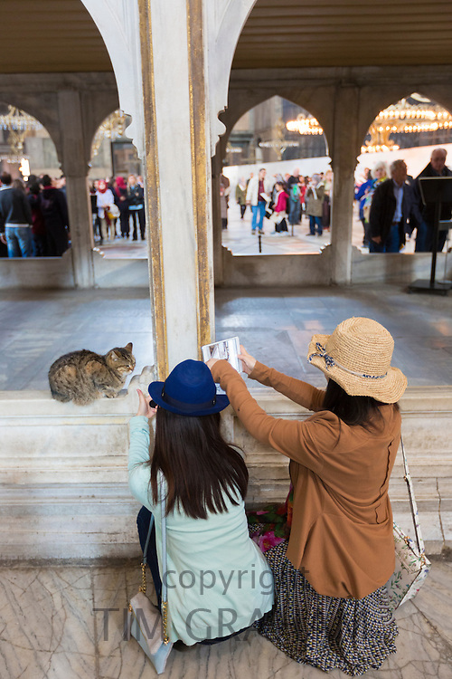 Japanese tourists at Hagia Sophia, Ayasofya Muzesi, mosque museum using tablet to photograph cat in Istanbul, Republic of Turkey