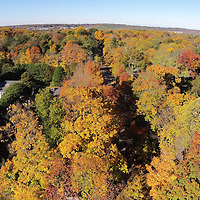 Autumn color along Bryant Ave. (aerial)