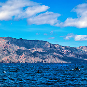 Dolphins off the coast of Loreto. Baja California Sur, Mexico.