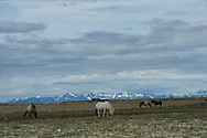 horses on a plane in front of mountains