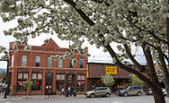 Flowering crabapple trees line a downtown street in Steamboat Springs, CO during the spring season.