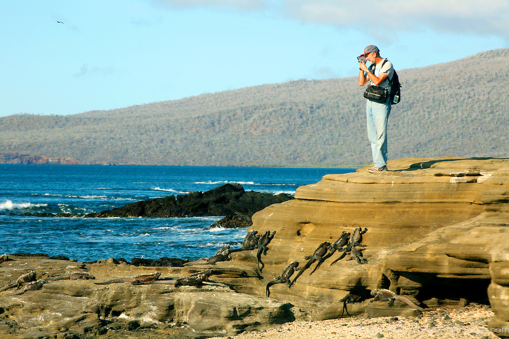 South America, Ecuador, Galapagos Islands, Santiago Island, James Island, Port Egas. Videographer unaware of iguanas below.