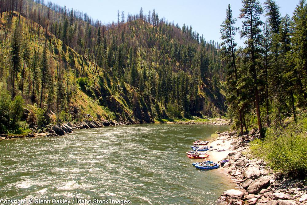 Salmon River, Frank Church River of No Return Wilderness, Idaho