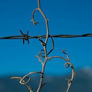 Grounded Vine