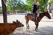 Cowboy roping a cow in Bocas, Holguin, Cuba.