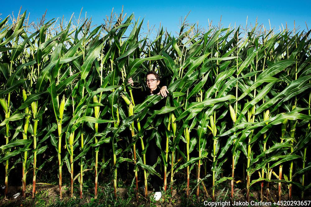 Susanne Gregersen in cornfield
