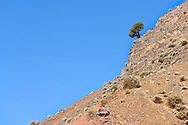 Tree on a mountain in the Ounila Valley, Morocco.