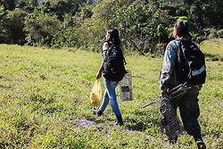 Research biologists walking through the Atlantic forest in the state of Rio de Janeiro to track and set up traps for golden lion tamarins   (Leontopithecus rosalia) which are endangered, Brasil, South America