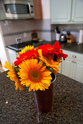 General view of a vase of sunflowers (Helianthus annuus) and red Gerbera Daisy flowers in a vase on a granite countertop in a kitchen.