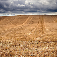Stubble in a Field under a Dark Sky near Amble Northumberland England