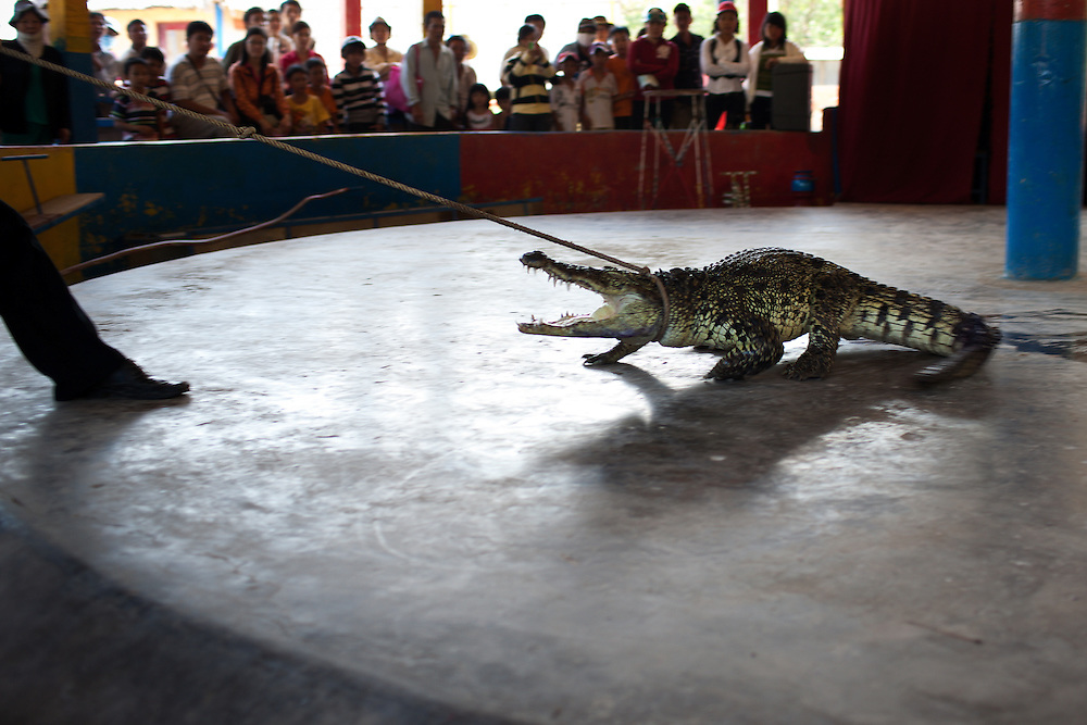 A small circus featuring monkeys and an alligator is held several times daily in Can Gio, Vietnam.