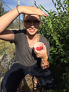 Picking Strawberries in the sun