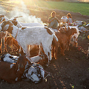 HUMAN & ANIMALS, there is some very strong relationship between humans and animals. they try to protect each other, and are supplementary for us humans! The shephards live under the open sky, cook and sleep under the open sky alog with their sheeps and goats!