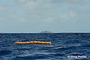 FAD ( Fish Aggregating Device ) bouys off Vava'u, Kingdom of Tonga, South Pacific
