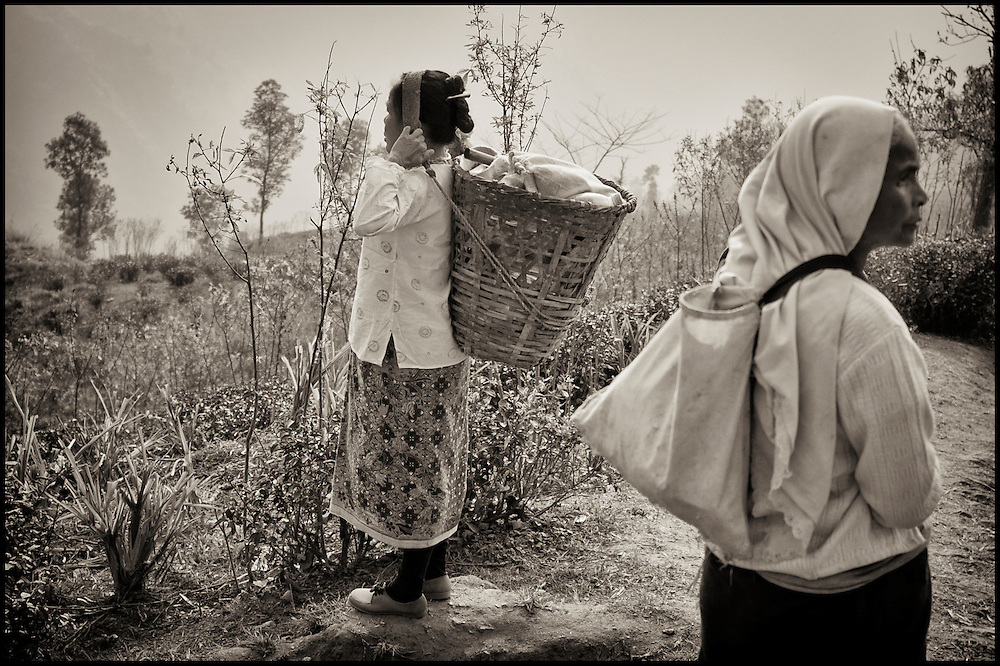 Tea women gathering before learning which field they will be sent to harvest for the day.