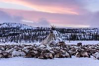 Chum mit Rentierherde, Polarural, Russland
