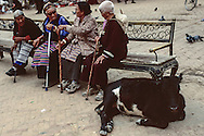 Buddist women and a cow take a rest in Boudhanath.