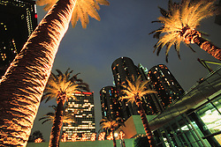 United States, Caliornia, Los Angeles, Skyscrapers and palms at dusk