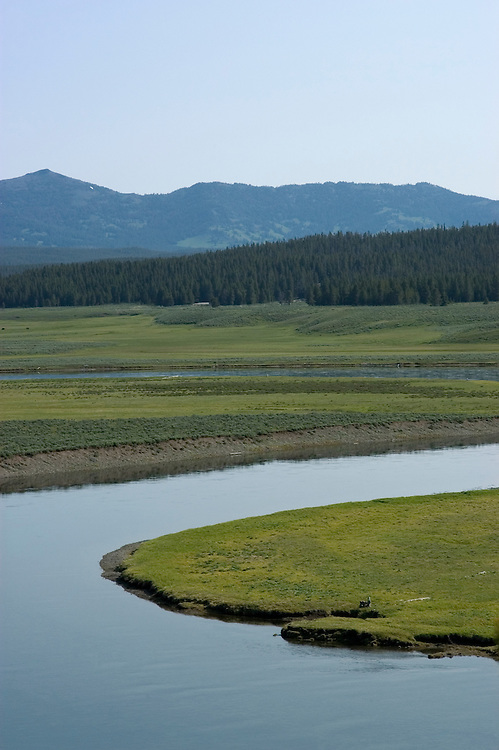 WY: Wyoming; Yellowstone National Park:.Grizzly Overlook in Hayden Valley..Photo #: yellow1225..Photo copyright Lee Foster, 510/549-2202, lee@fostertravel.com, www.fostertravel.com..