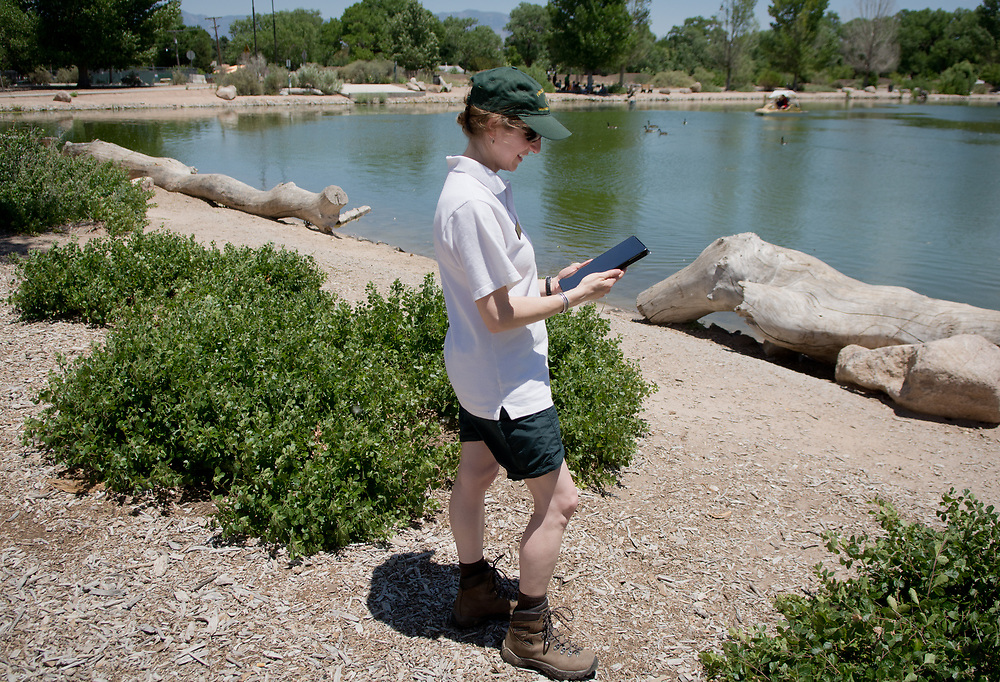mkb061017z/metro/Marla Brose --  Apple Snider from the USDA Forest Service demonstrate how to use the Agents of Discovery app to explore Tingley Beach and the bosque nearby, Saturday, June 10, 2017. (Marla Brose/Albuquerque Journal)
