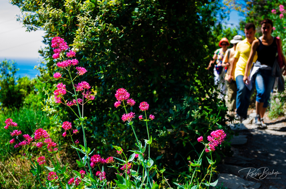 Tourists and wildflowers on the Sentiero Azzurro (Blue Trail) near Vernazza, Cinque Terre, Liguria, Italy