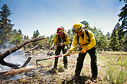 22 JUNE 2010 - FLAGSTAFF, AZ: Scott Van Eckhoutte (CQ) from Christopher Creek FD (LEFT) and Bob Urban (CQ) from Beaver Valley FD work a hot spot during mop up on the line at the Schultz Fire burning north of Flagstaff, AZ. The fire has consumed more than 12,000 acres of forest land and burned within a few feet of homes in some neighborhoods in Flagstaff.    PHOTO BY JACK KURTZ