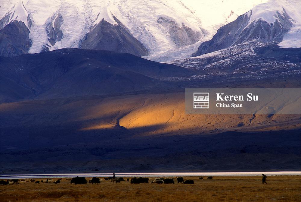 Sheep and yaks graze on meadow on Pamir Plateau, Xinjiang Province, Silk Road, China