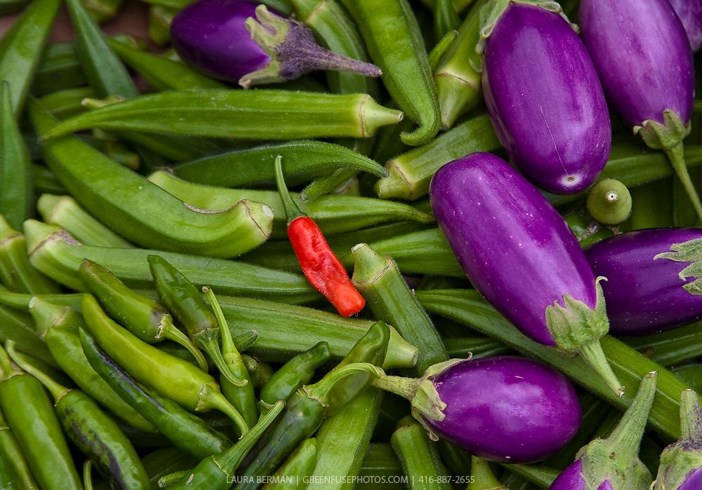 Abundant first year harvest from FarmStart's McVean Incubator Farm in Brampton, a suburb of Toronto, Ontario.