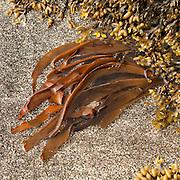 Seaweed on the beach, close up