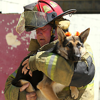 Steve Shaffer, a Captain with the Tupelo Fire Departmant, rescues Lucy, a one year old German Shepherd, during a demonstration of canine oxygen masks at the North Mississippi Law Enforcement Training Center on Wednesday afternoon. A fundraiser purchased enough oxygen masks for animals to present to each one of the volunteer fire departments in Leee County and the city of Tupelo.