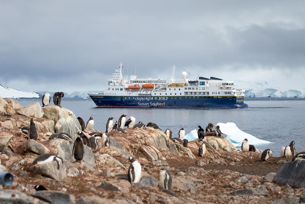 The Gentoo penguin colony at Jougla Piont, Antarctica