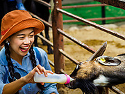 17 AUGUST 2018 - BANGKOK, THAILAND:   A woman gives milk to a goat in the domestic goat pen at Dusit Zoo in Bangkok. The zoo opened in 1938. The zoo grounds were originally the Dusit Royal Garden. The zoo is scheduled to close by the end of August 2018 because it is being relocated to Nakhon Pathom province, south of Bangkok.     PHOTO BY JACK KURTZ
