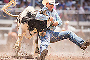Steer Wrestler Justin Shaffer of Hallsville, Texas grabs the horns of a steer at the Cheyenne Frontier Days rodeo at Frontier Park Arena July 24, 2015 in Cheyenne, Wyoming. Frontier Days celebrates the cowboy traditions of the west with a rodeo, parade and fair.