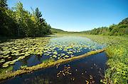 Wallingford, Vermont